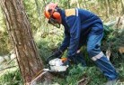 Belconnen Tree felling services 21